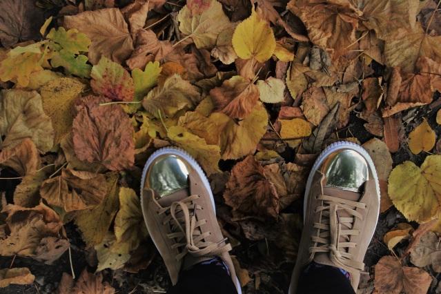 foliage-4514245