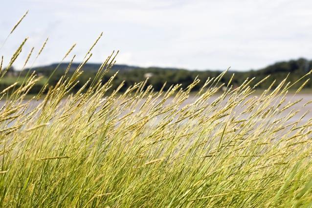 grasses-419891