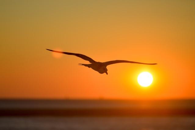 seagull-601287