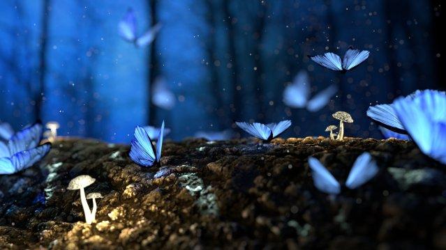 butterfly-2049567